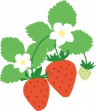 大阪でイチゴ狩り食べ放題なら おすすめの農園はココ!