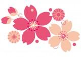 大阪城でお花見 桜の見頃はいつ?ライトアップと混雑情報も♪
